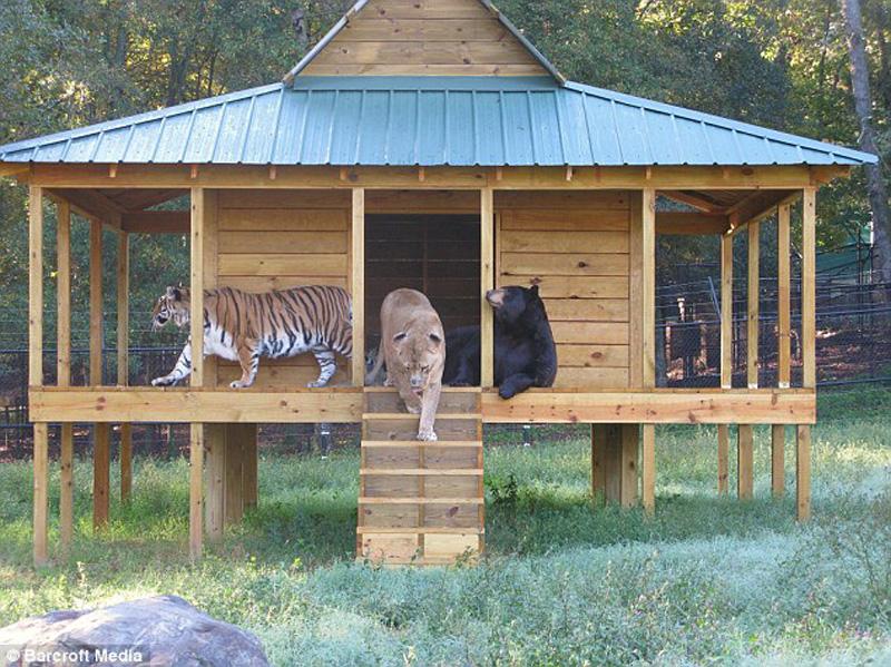 unbelievablefriendship 1 Невероятная дружба трех хищников