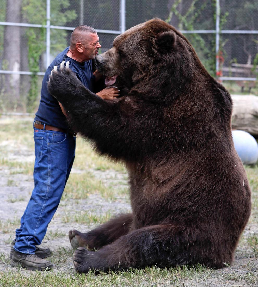 Огромные животные
