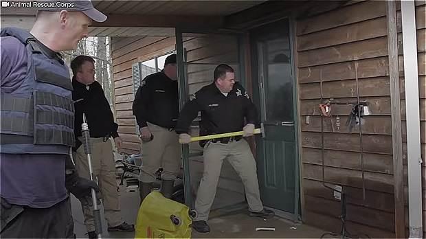 Соседи жаловались на странные звуки из дома... Спасение собак