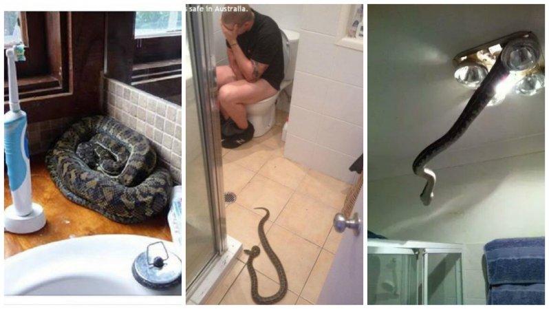 22 фотодоказательства, что Австралия - ад для офидиофобов австралия, змея