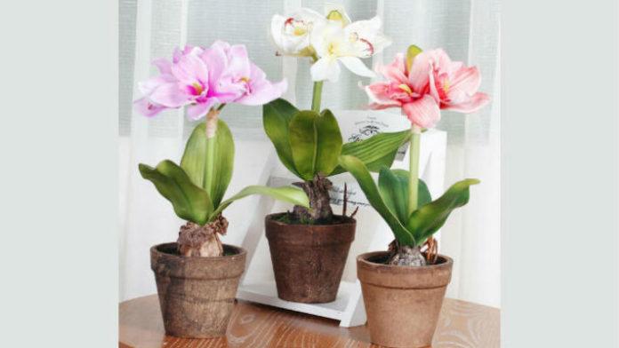 Маленькая хитрость чтобы цветы в доме цвели пышно и долго