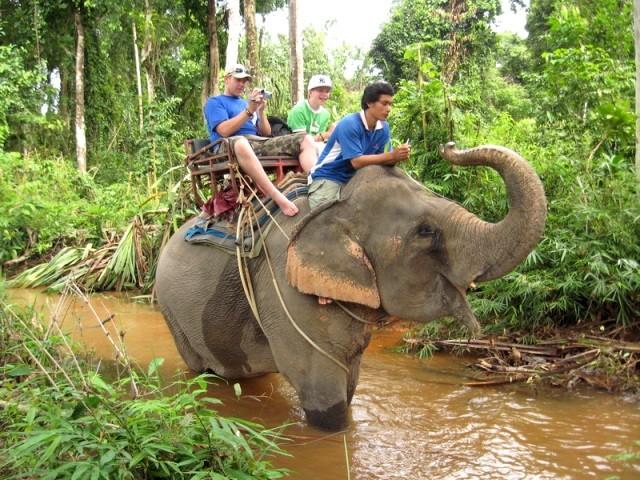 Еще можно купить бананы и покормить слона в благодарность за Вашу поездку. После катания Вам предложат купить рамку с вашей фотографией, сделанной из помета слона (рамка конечно, а не фотография). kwai, thailand, паттайя, река квай, тайланд