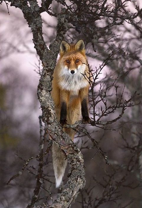 fox_20120409_00640_011 (481x700, 73Kb)