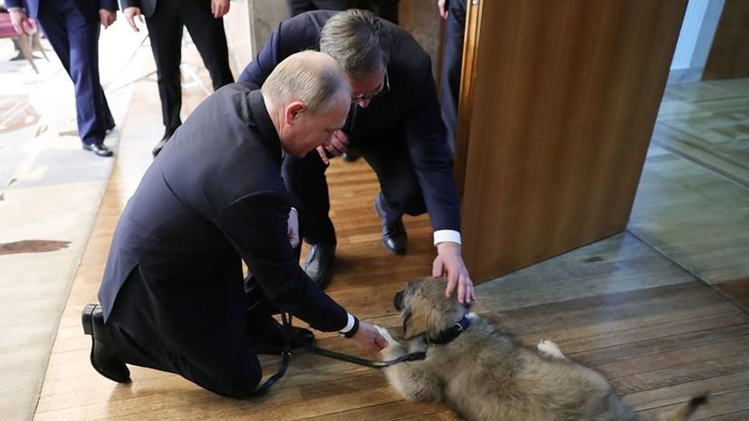 Президент Сербии подарил Путину Пашу