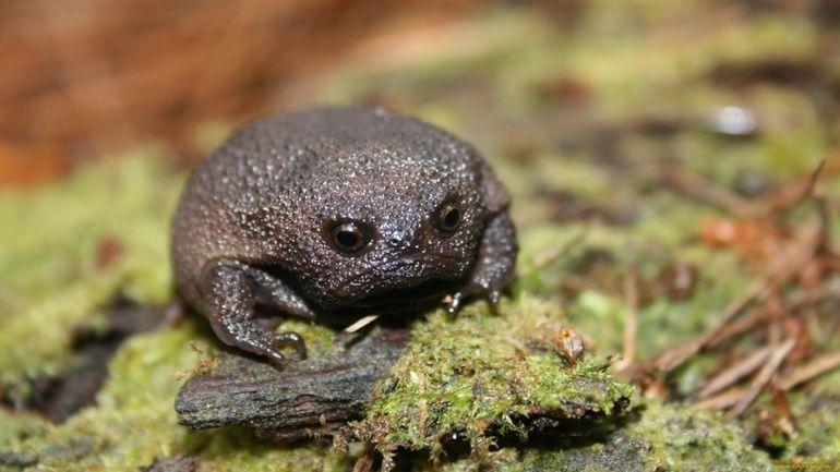 Самые необычные животные нашей планеты, которые могла придумать только природа