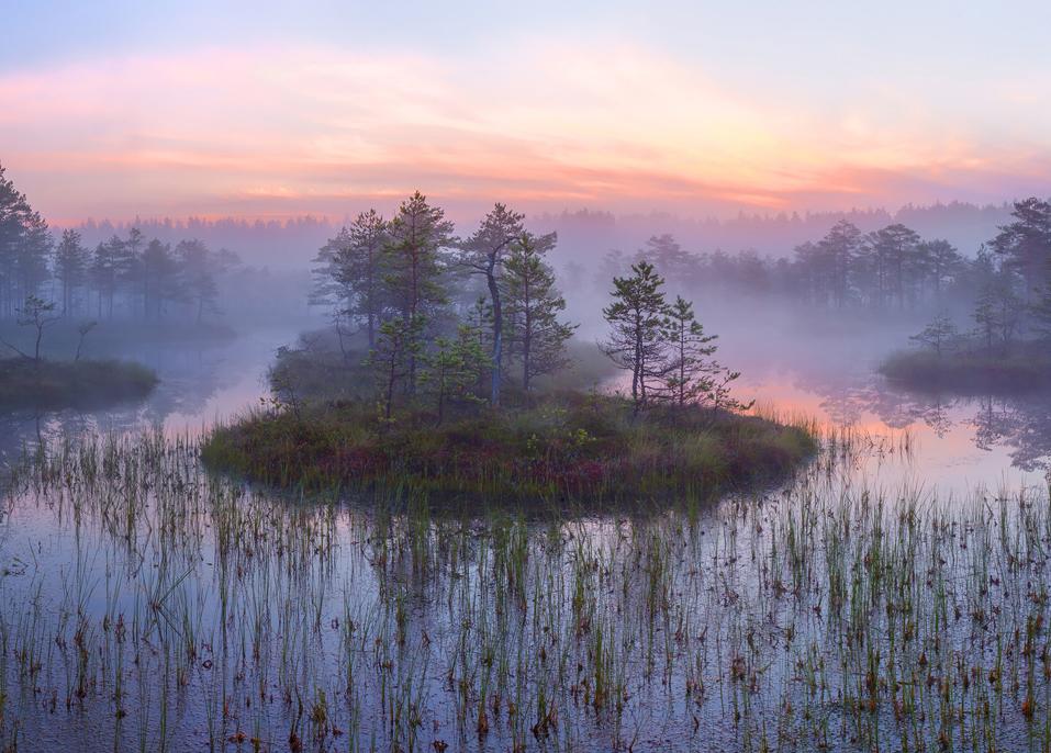 Болота Ленинградской области, которые поражают своей красотой