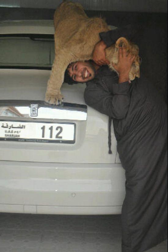 catsncars18 Хищные кошечки и дорогие машины: досуг арабского миллионера