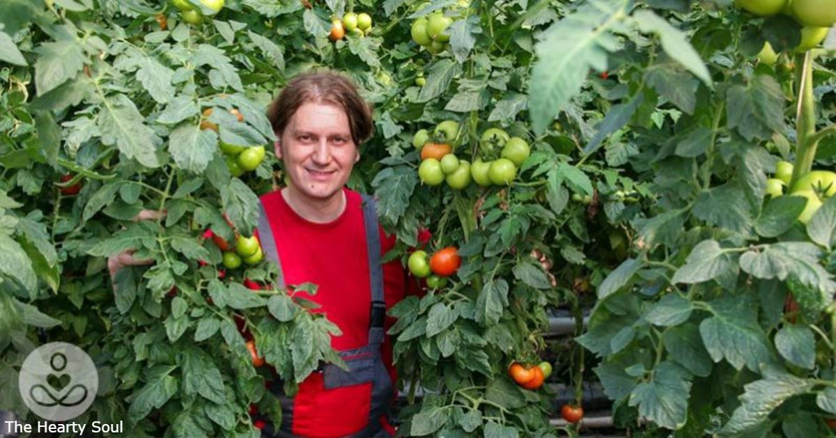 Правильный способ сажать помидоры - так, чтобы они были выше 2 метров