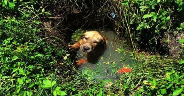 Щенок тонул в болоте, но ост…