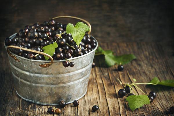 В южных регионах получить хороший урожай черной смородины сложно