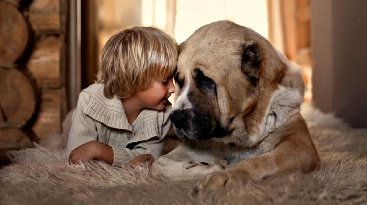 Учёные через ДНК сумели проанализировать собачью психологию