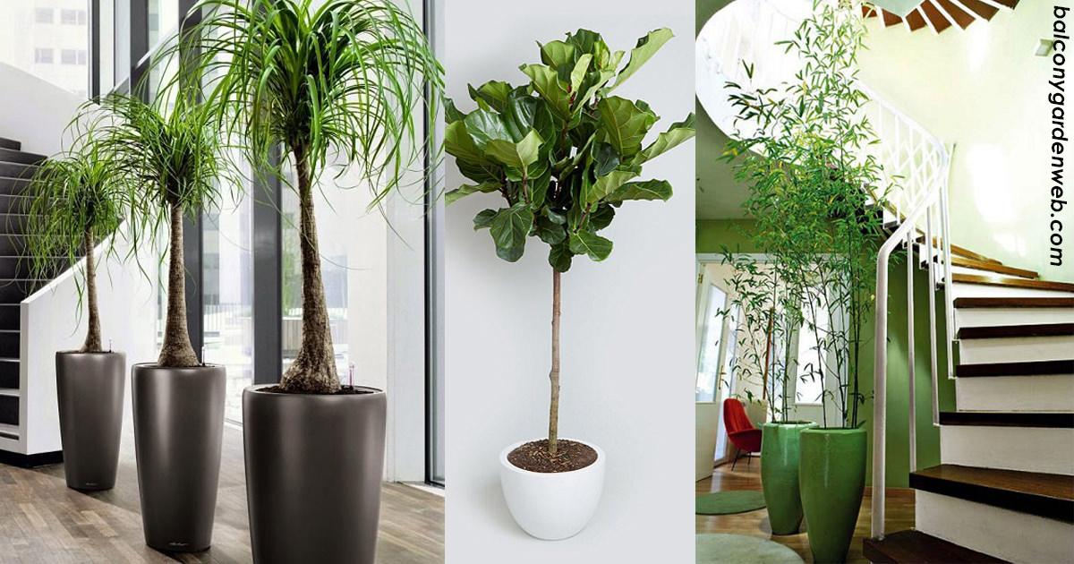 7 беспроблемных деревьев, которые можно выращивать дома
