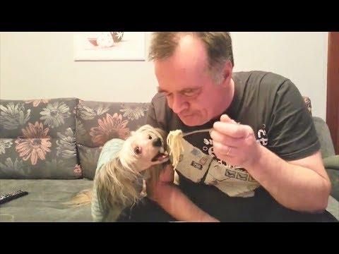 Приколы про животных Самые Смешные видео приколы про животных Приколы про собак 2017 Funny Dogs 2017