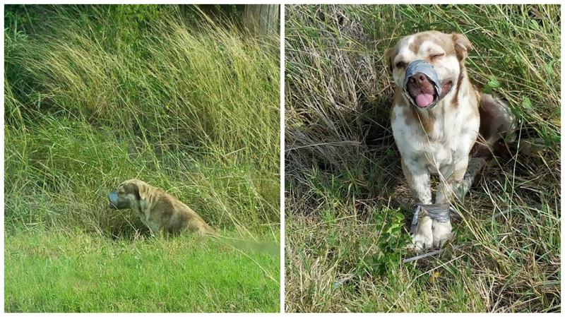 В канаве нашли живого пса со связанными лапами и скотчем вокруг морды