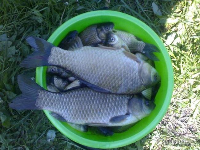 Рыба встанет в очередь. Секретная насадка бывалого рыболова за три минуты