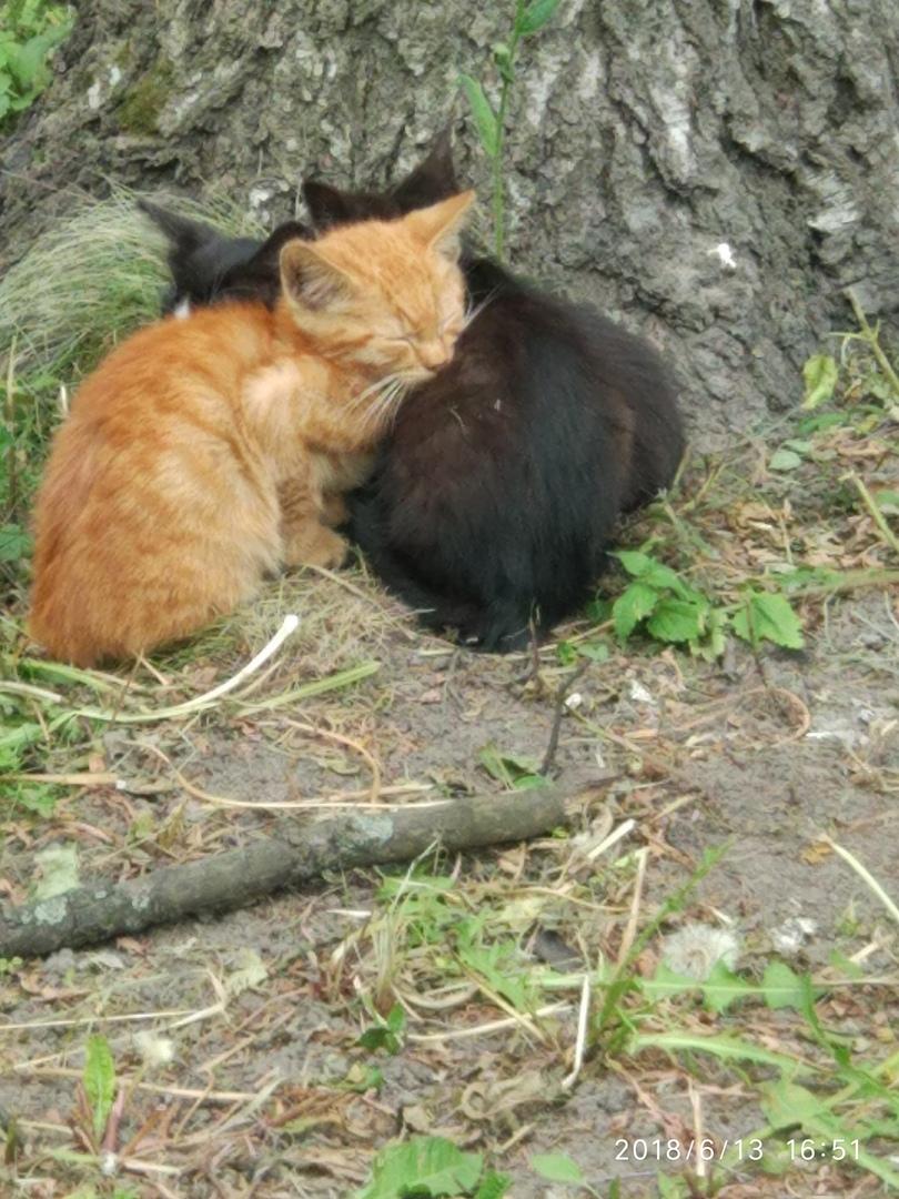 Вместе с этими крохотными созданиями в ваш дом войдут любовь и счастье!