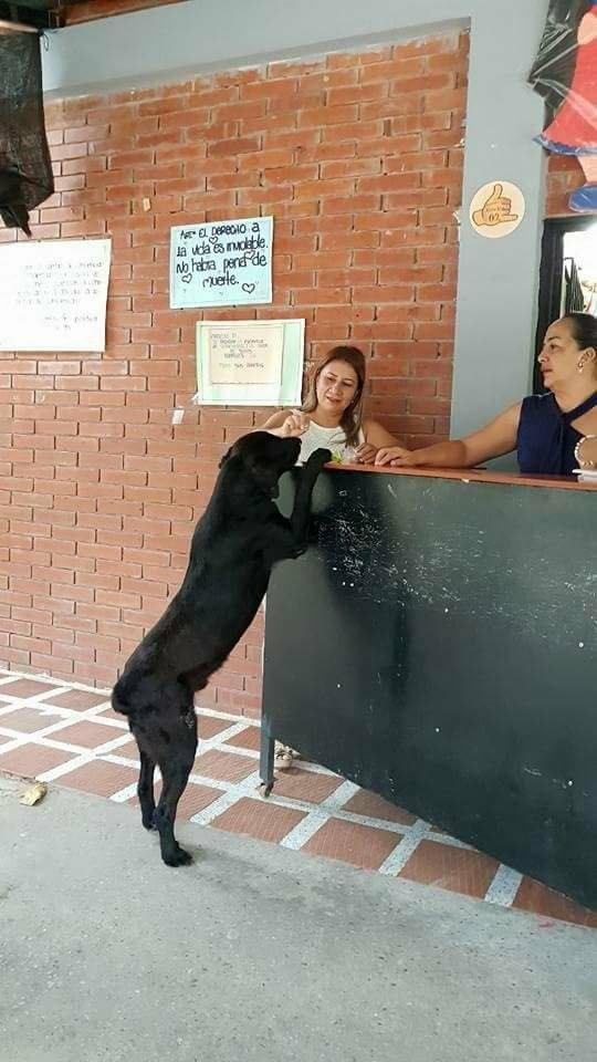 """Эта собака научилась """"покупать"""" вкусняшки, расплачиваясь за них листьями"""