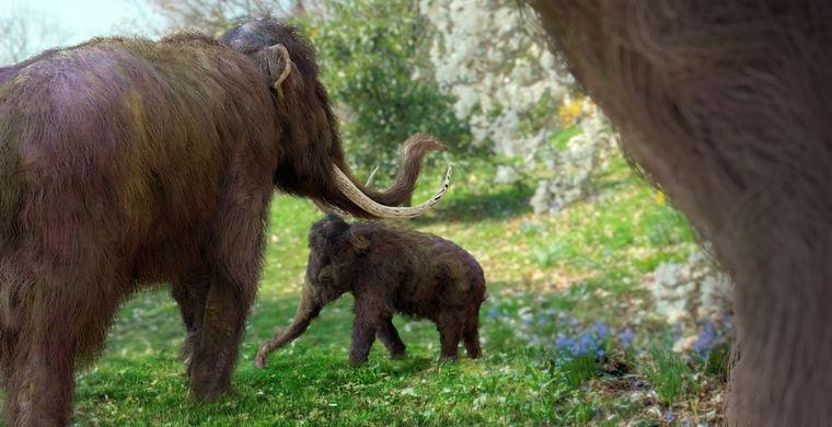 Проект по возрождению мамонтов получил дополнительные $100 000