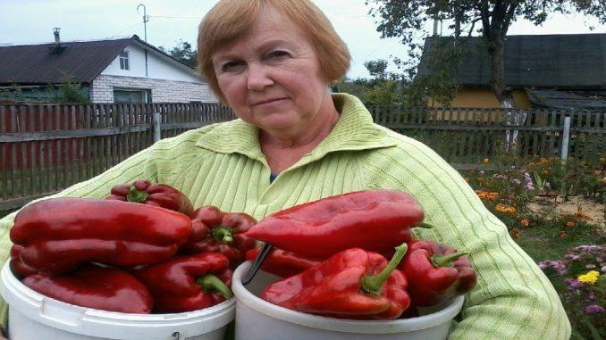 10 секретов выращивания перц…