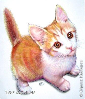 Картина панно рисунок День рождения Рисование и живопись Кот по прозвищу Сэмэн сухая пастель Пастель фото 1