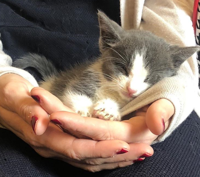 Слепой котенок бродил по улице… Его забрали в приют, а он удивил спасителей своим характером!