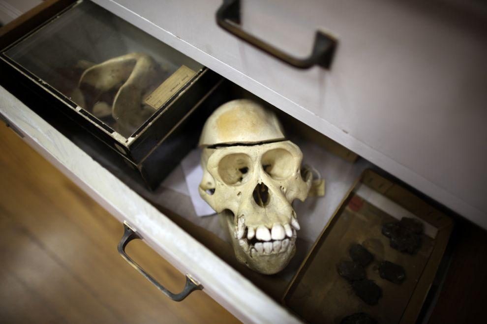 gmoz07 Лондонский музей зоологии и сравнительной анатомии Гранта