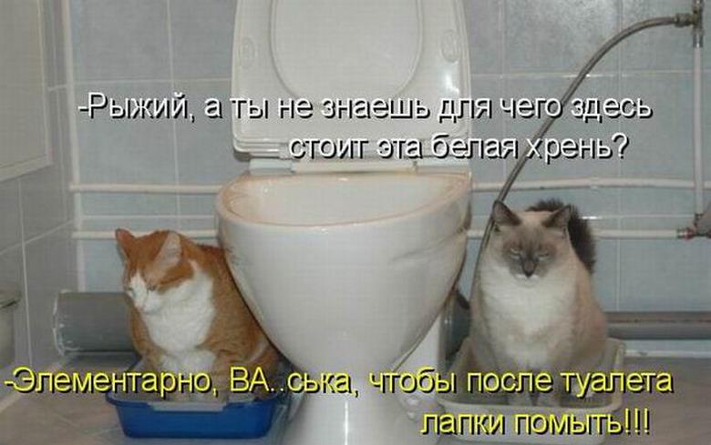 Находчивость))
