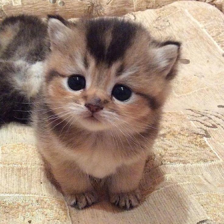 15+ уморительных животных, которые поднимут Вам настроение!Здравствуйте,я антистресс)