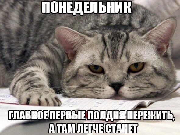 Подборка котоматриц для хорошего настроения)