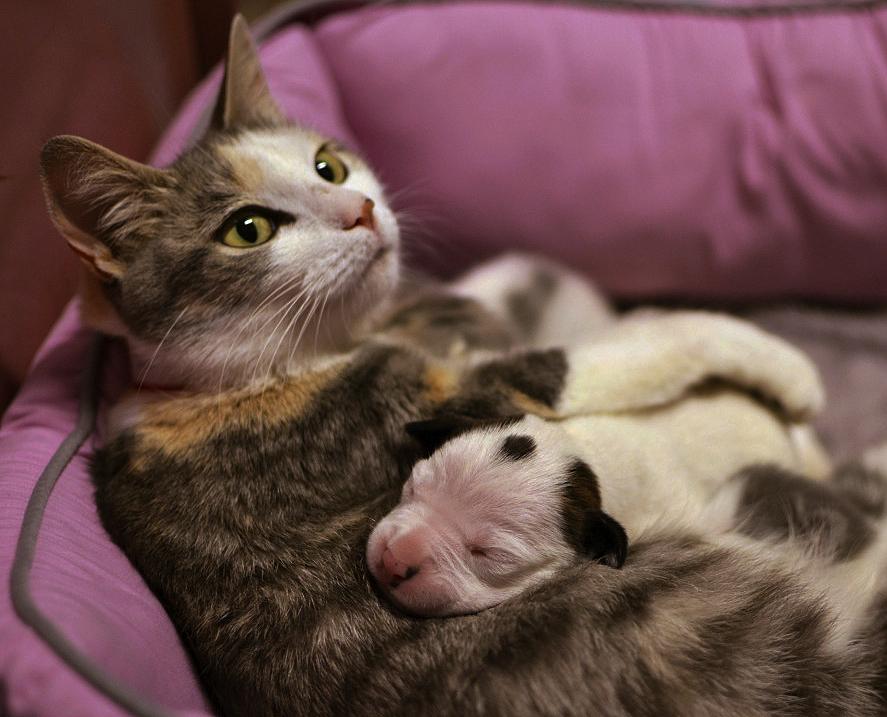 Почему животные одного вида часто выкармливают детенышей другого вида животных?