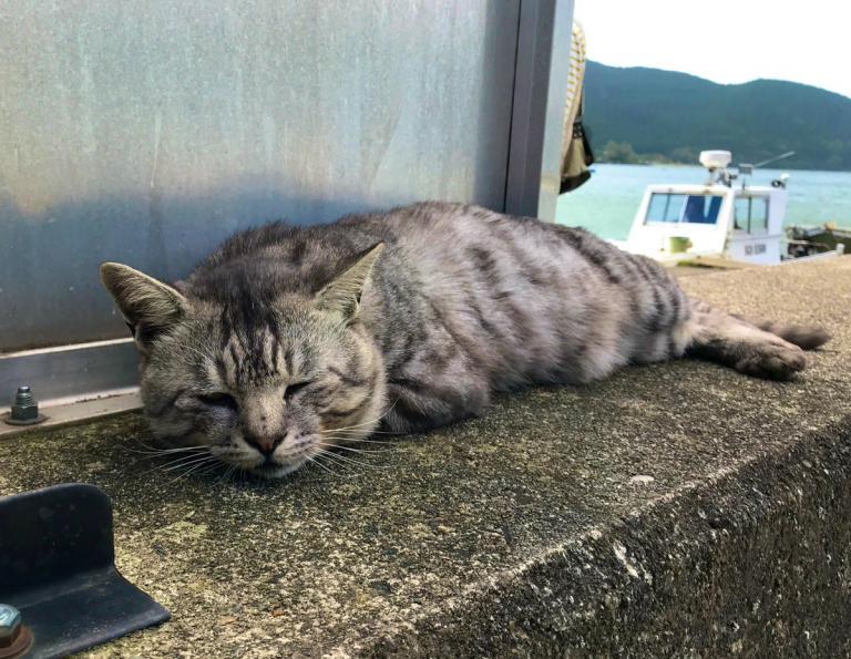 Они спасены! Кошки с «кошачьего острова» Окишима пережили тайфун!
