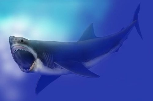 Мегалодон: удивительные факты об ужасной акуле-убийце