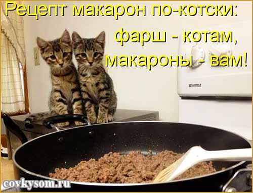 Кулинарные котоматрицы 29 (юмор)