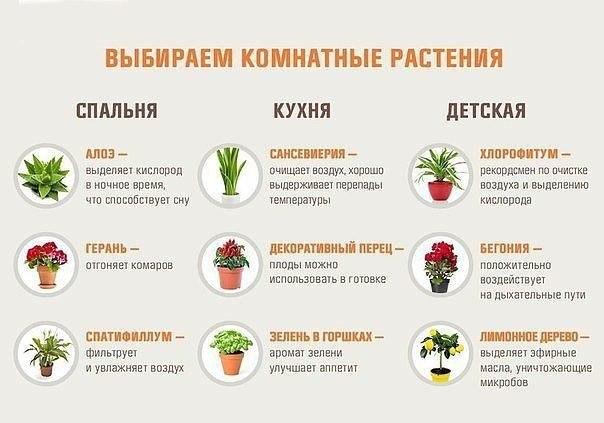 Выбираем комнатные растения