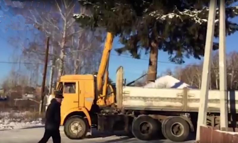 На два метра ушла-значит чужая: Челябинские чиновники украли елку у местной жительницы