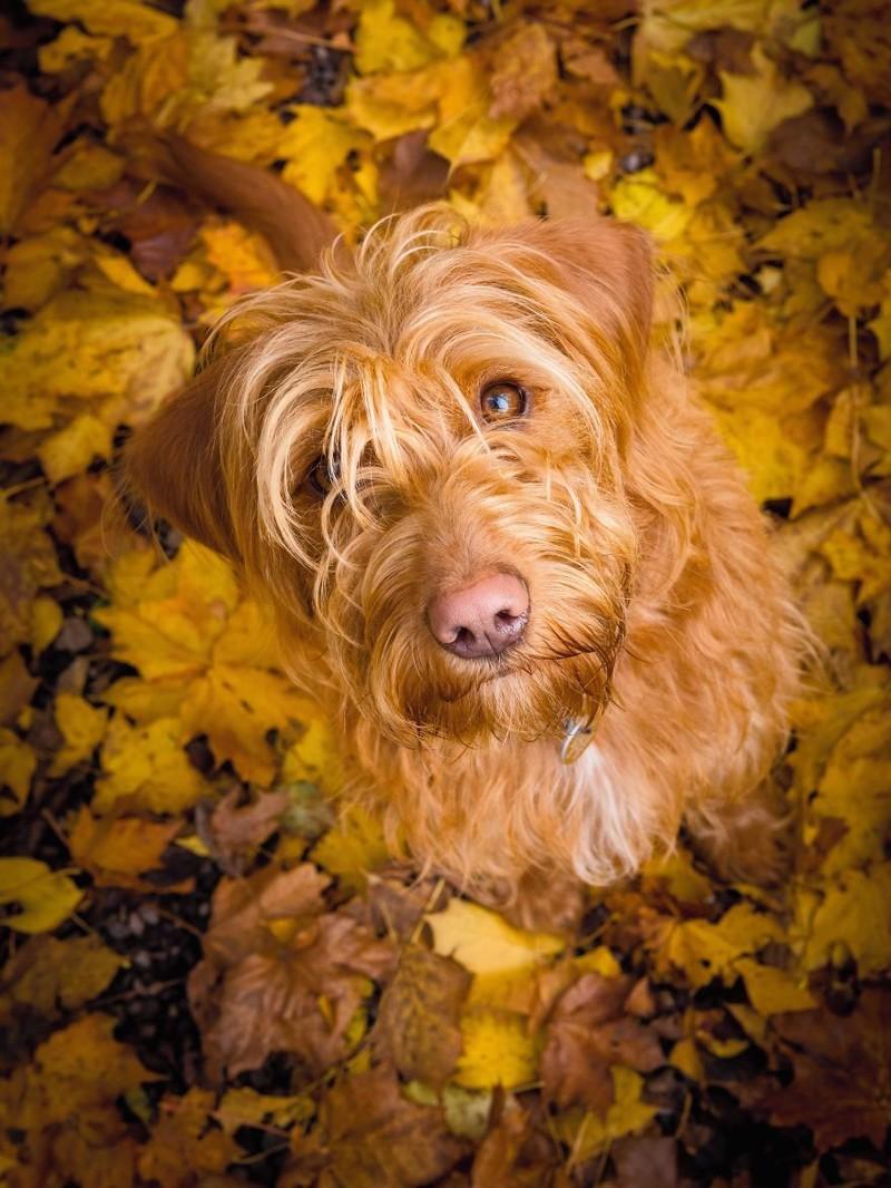 """3 место в категории """"Портрет собаки"""" - Ноэль Беннетт, Великобритания Кеннел клаб, животные, конкурс, лондон, портрет, собаки, фото, фотография года"""