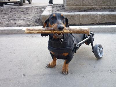 фото коляски для собак