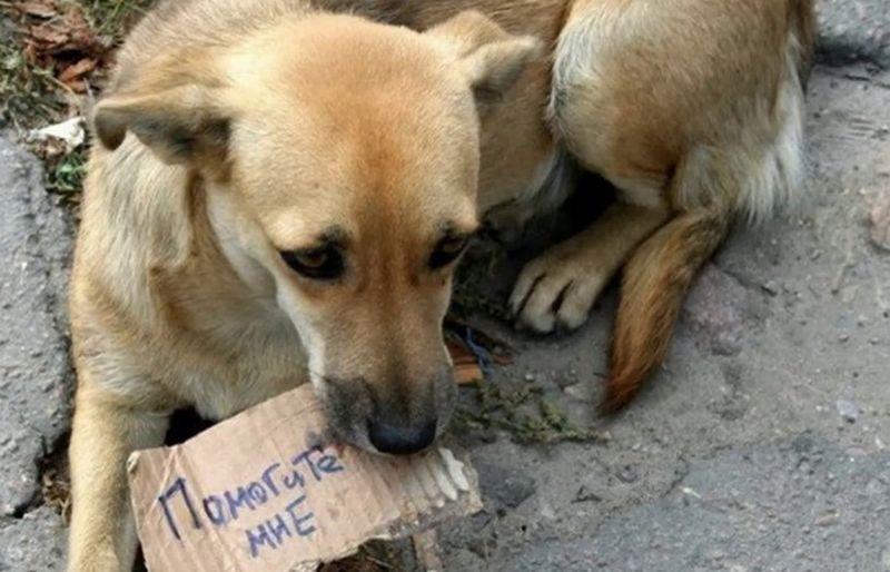 Как в Италии борются с безответственными хозяевами животных