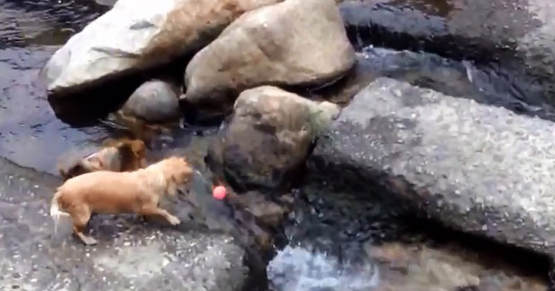Парень гулял вдоль берега реки, когда увидел собаку. Он тут же достал камеру и начал снимать происходящее!