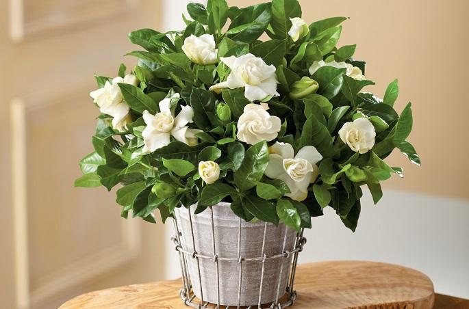 какие цветы должны быть в доме обязательно фото с названиями и описанием