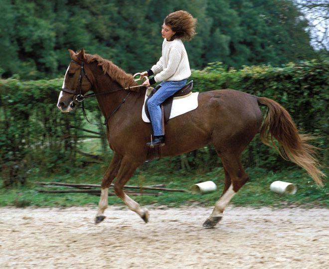 любовь к лошадям
