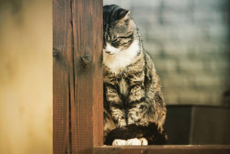 Горожанам запретили держать дома больше двух котов