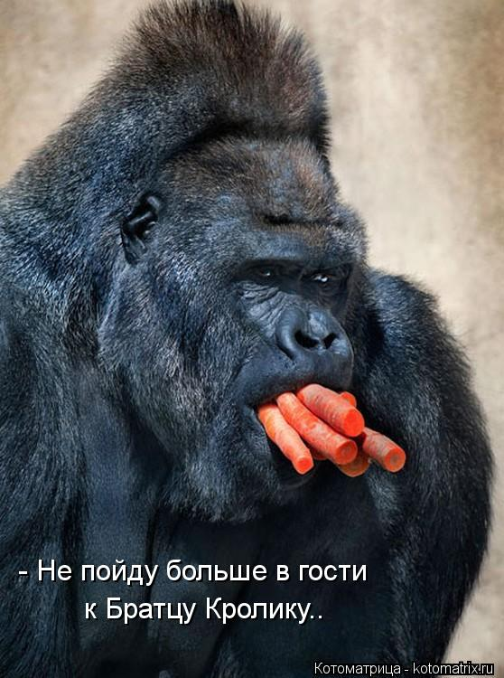 Котоматрица: - Не пойду больше в гости к Братцу Кролику..