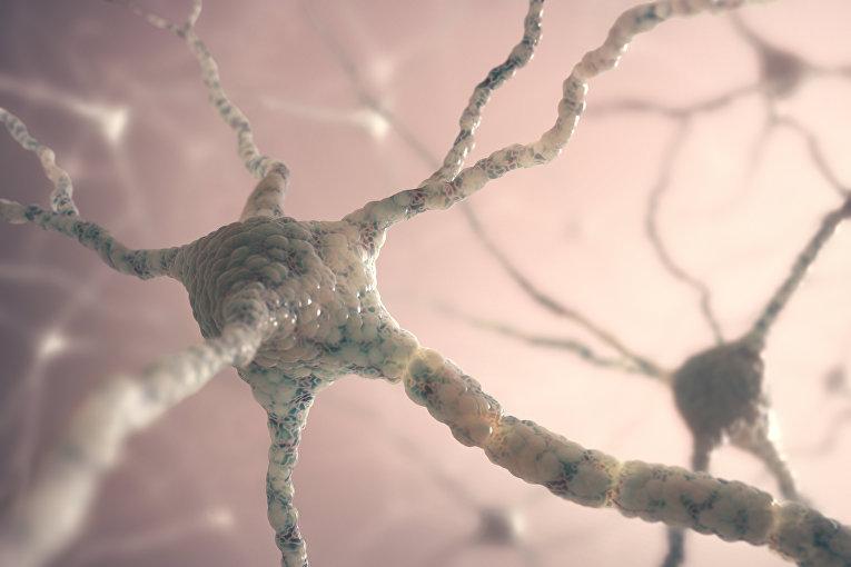 Ученые открыли ген, управляющий старением мозга