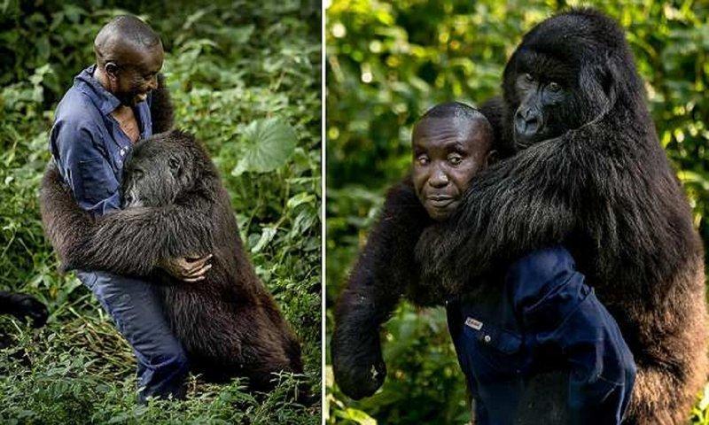 Смотритель национального парка в Конго завел себе необычного друга
