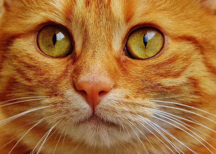 Подобрали на улице кота, от которого потом пищал весь дом