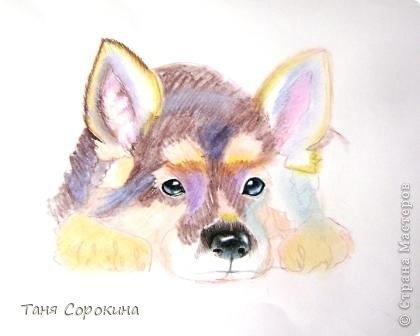 Картина панно рисунок Рисование и живопись Тренируюсь на щенках  Пастель фото 2