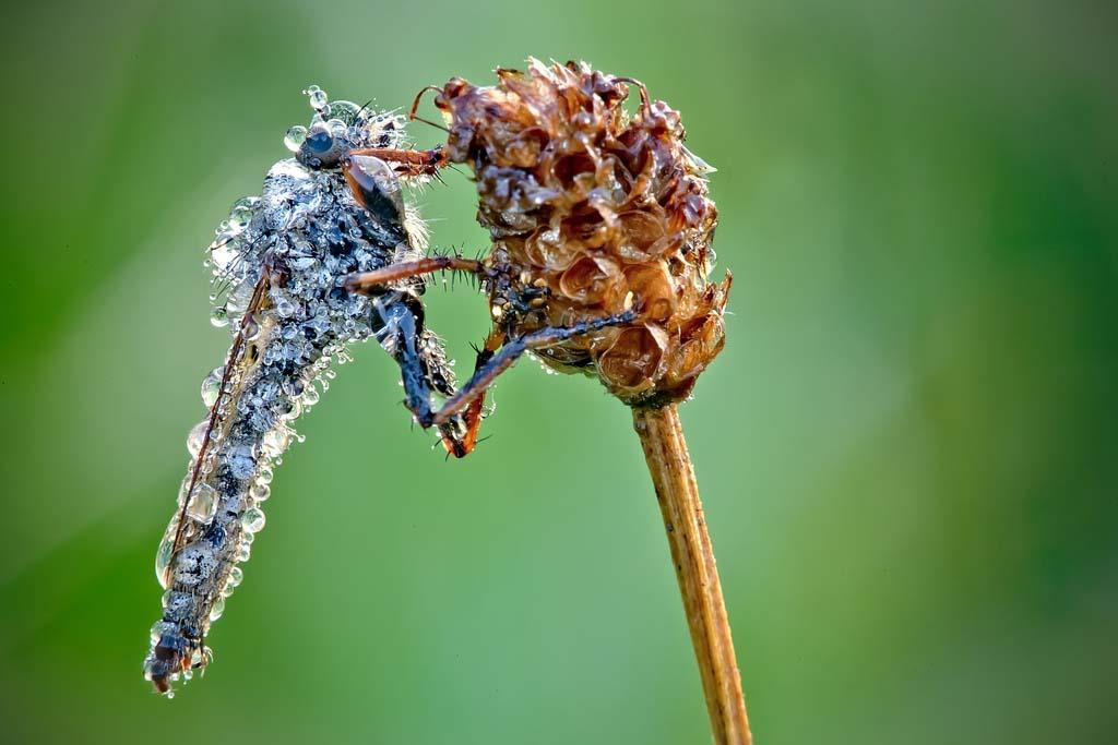 David Chambon 9 «Драгоценные» насекомые Давида Шамбона