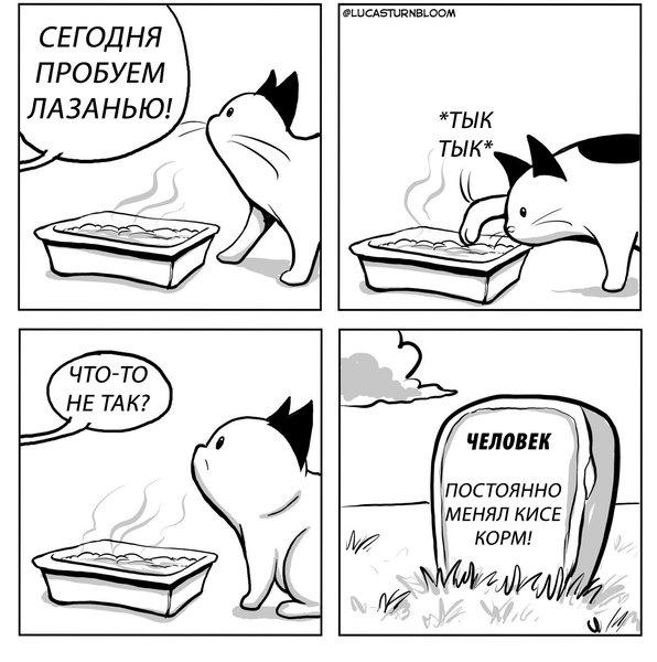 Наглая кошка объясняет глупым людям, кто главный в доме – вышли новые честные и смешные комиксы о «котодиктаторе»