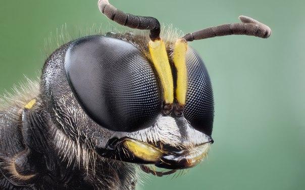 Яд бразильской осы убивает раковые клетки, не повреждая здоровые